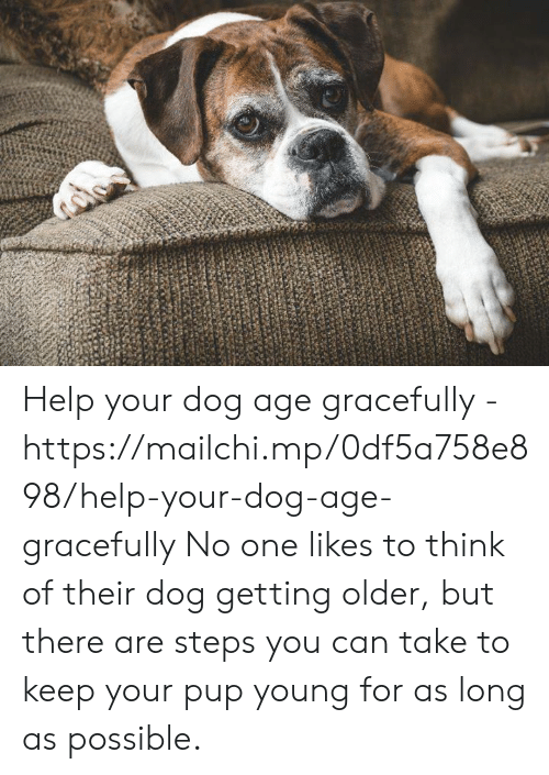 Memes, Help, and Pup: Help your dog age gracefully - https://mailchi.mp/0df5a758e898/help-your-dog-age-gracefully  No one likes to think of their dog getting older, but there are steps you can take to keep your pup young for as long as possible.