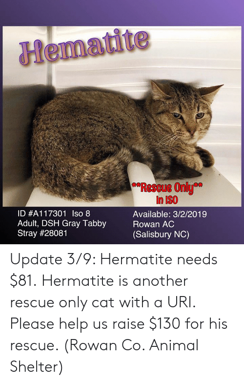 Hematite Rescue Only in ISO Available 322019 ID #A11 7301 Iso 8