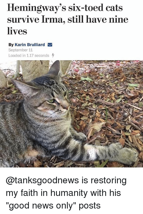 """Cats, Funny, and News: Hemingway's six-toed cats  survive Irma, still have nine  lives  By Karin Brulliard  September 11  Loaded in 1.17 seconds @tanksgoodnews is restoring my faith in humanity with his """"good news only"""" posts"""