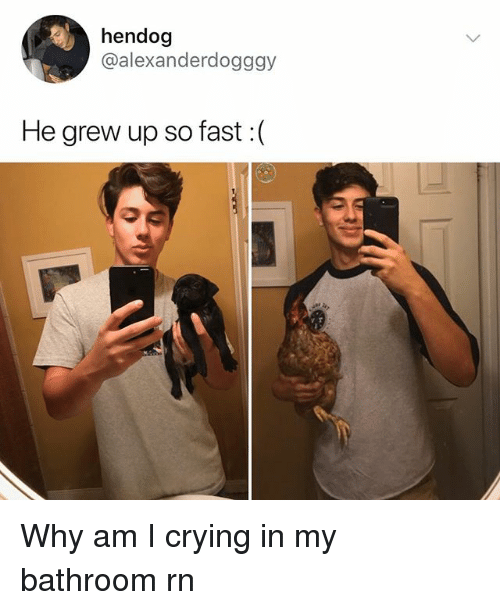 Crying, Memes, and 🤖: hendog  @alexanderdogggy  He grew up so fast :( Why am I crying in my bathroom rn