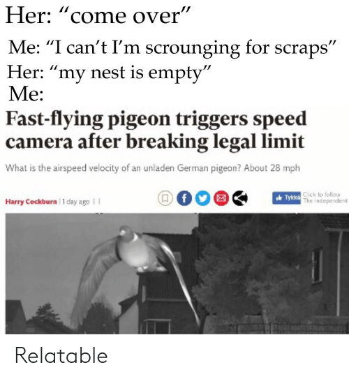 """Click, Come Over, and Reddit: Her: """"come over""""  Me: """"I can't I'm scrounging for scraps""""  Her: """"my nest is empty  Me:  Fast-flying pigeon triggers speed  camera after breaking legal limit  What is the airspeed velocity of an unladen German pigeon? About 28 mph  Click to follow  The Independent  Harry Cockburn 1 day ago I I Relatable"""