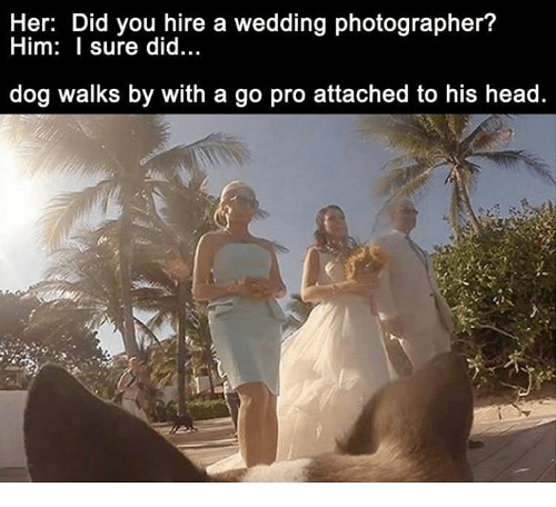 Her Did You Hire a Wedding Photographer? Him I Sure Did Dog Walks by