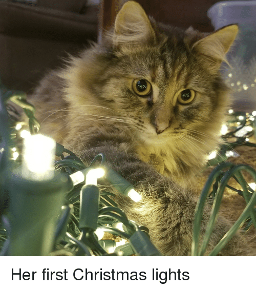 Christmas, Time, and Her: Her first Christmas lights