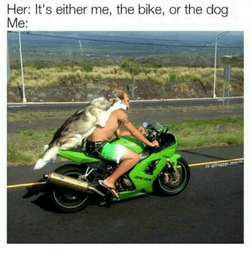 Me or the bike or the dog