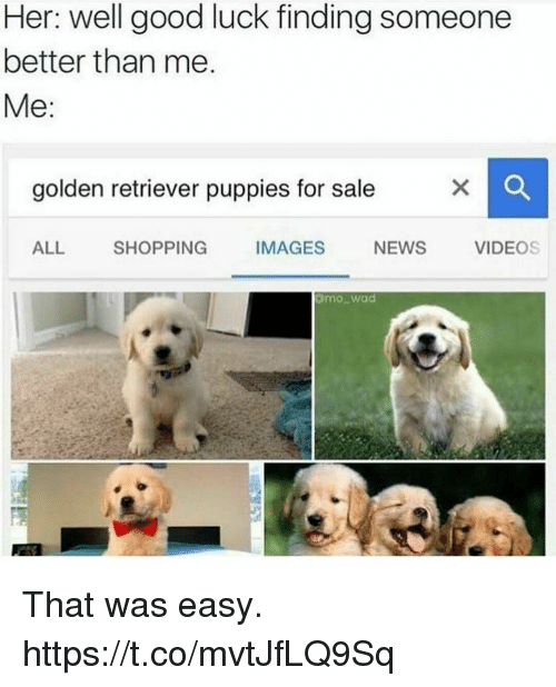 Funny, News, and Puppies: Her: well good luck finding someone  better than me  Me:  golden retriever puppies for sale  ALL SHOPPING IMAGES NEWS VIDEOS  mowad That was easy. https://t.co/mvtJfLQ9Sq