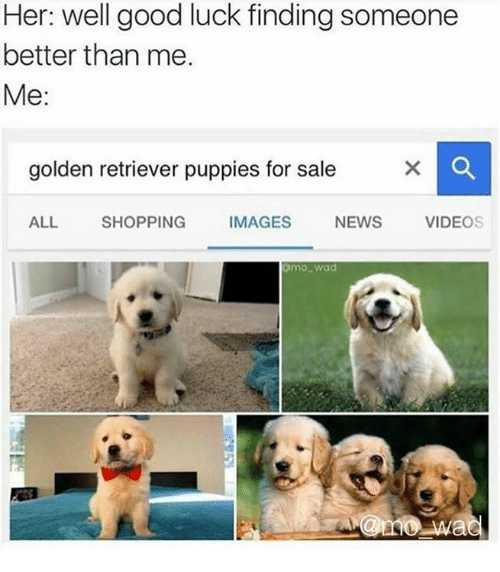 Dank, News, and Puppies: Her: well good luck finding someone  better than me.  Me:  golden retriever puppies for sale  ALL SHOPPING IMAGES NEWS VIDEOS  mo wad