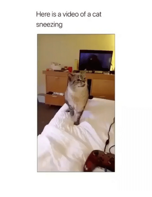 Memes, Video, and 🤖: Here is a video of a cat  sneezing