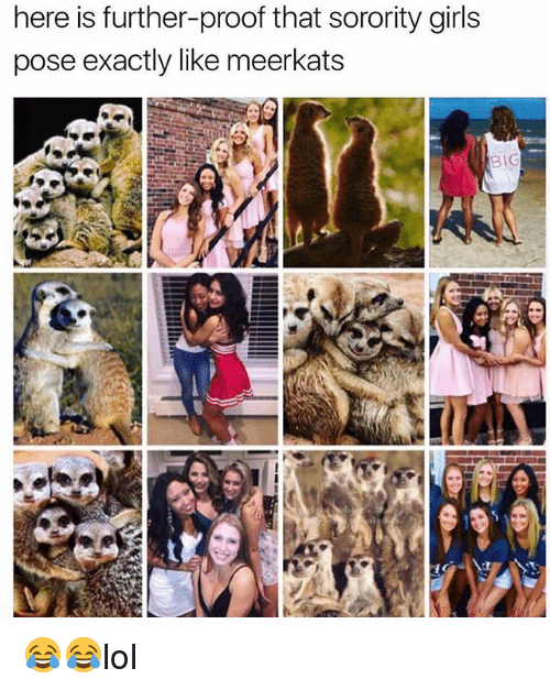 Girls, Memes, and Sorority: here is further-proof that sorority girls  pose exactly like meerkats  BIG 😂😂lol
