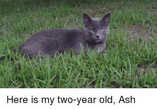 Ash, Old, and  Year