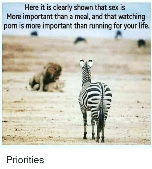 Life, Sex, and Porn: Here it is clearly shown that sex is  More important than a meal, and that watching  porn is more important than running for your life. Priorities