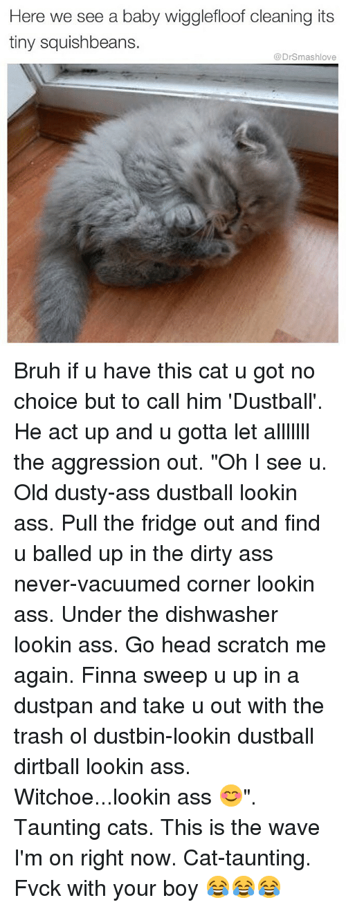 """Ass, Bruh, and Cats: Here  we see a baby wigglefloof cleaning its  tiny squishbeans.  @DrSmashlove Bruh if u have this cat u got no choice but to call him 'Dustball'. He act up and u gotta let alllllll the aggression out. """"Oh I see u. Old dusty-ass dustball lookin ass. Pull the fridge out and find u balled up in the dirty ass never-vacuumed corner lookin ass. Under the dishwasher lookin ass. Go head scratch me again. Finna sweep u up in a dustpan and take u out with the trash ol dustbin-lookin dustball dirtball lookin ass. Witchoe...lookin ass 😊"""". Taunting cats. This is the wave I'm on right now. Cat-taunting. Fvck with your boy 😂😂😂"""