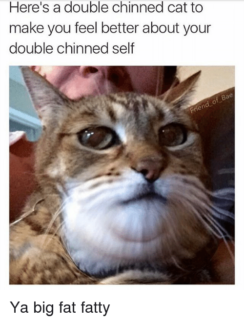 Bae, Funny, and Girl Memes: Here's a double chinned cat to  make you feel better about your  double chinned self  Bae Ya big fat fatty