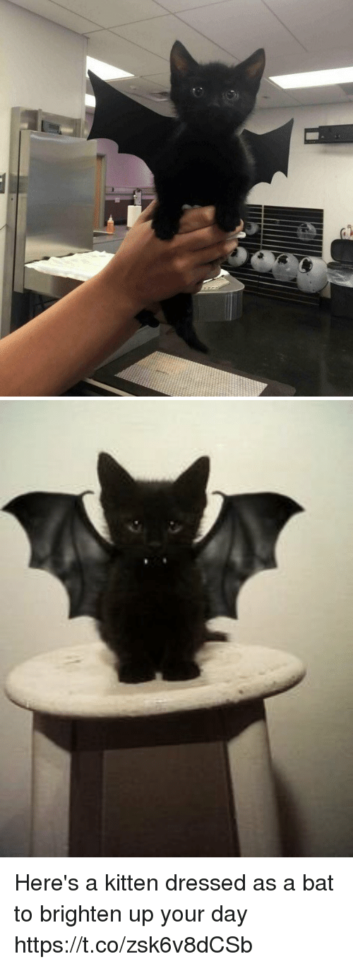 Girl Memes, Bat, and Kitten: Here's a kitten dressed as a bat to brighten up your day https://t.co/zsk6v8dCSb