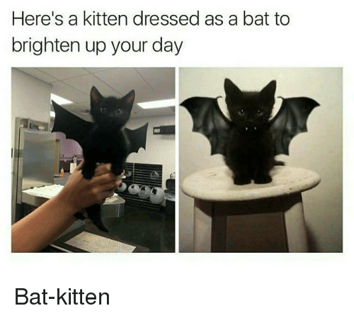 Bat, Kitten, and Day: Here's a kitten dressed as a bat to  brighten up your day Bat-kitten