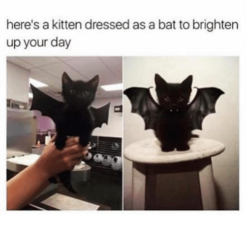 Grumpy Cat, Bat, and Kitten: here's a kitten dressed as a bat to brighten  up your day