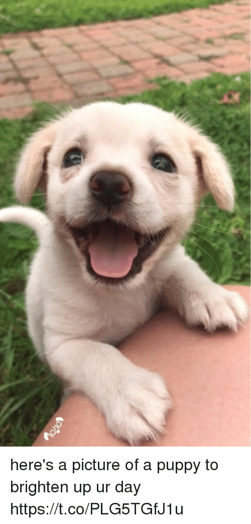 Puppy, Girl Memes, and A Picture: here's a picture of a puppy to brighten up ur day https://t.co/PLG5TGfJ1u