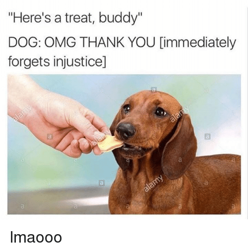 "Dogs, Omg, and Thank You: ""Here's a treat, buddy""  DOG: OMG THANK YOU Cimmediately  forgets injusticed lmaooo"