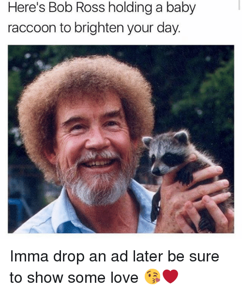 heres bob ross holding a baby raccoon to brighten your 28179923 ✅ 25 best memes about baby raccoon baby raccoon memes