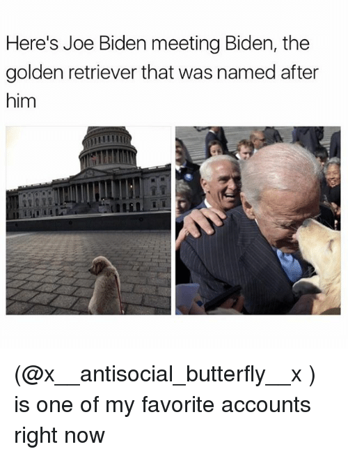 Funny, Meme, and Biden: Here's Joe Biden meeting Biden, the  golden retriever that was named after  him (@x__antisocial_butterfly__x ) is one of my favorite accounts right now
