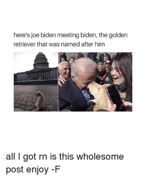 Relatable, Biden, and Joe: here's joe biden meeting biden, the golden  retriever that was named after him all I got rn is this wholesome post enjoy -F