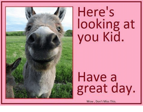 Here's Looking at You Kid Have a Great Day Wow Don't Miss