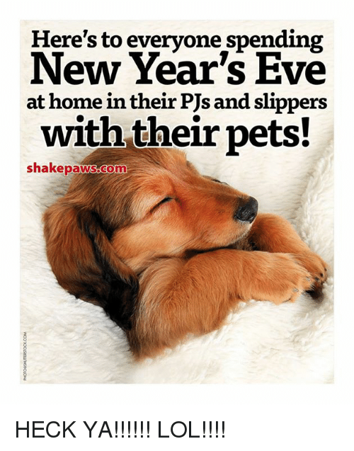 Here\'s to Everyone Spending New Year\'s Eve at Home in Their PJs and ...