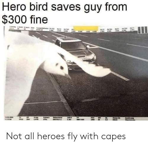 Heroes, Hero, and Fly: Hero bird saves guy from  $300 fine Not all heroes fly with capes