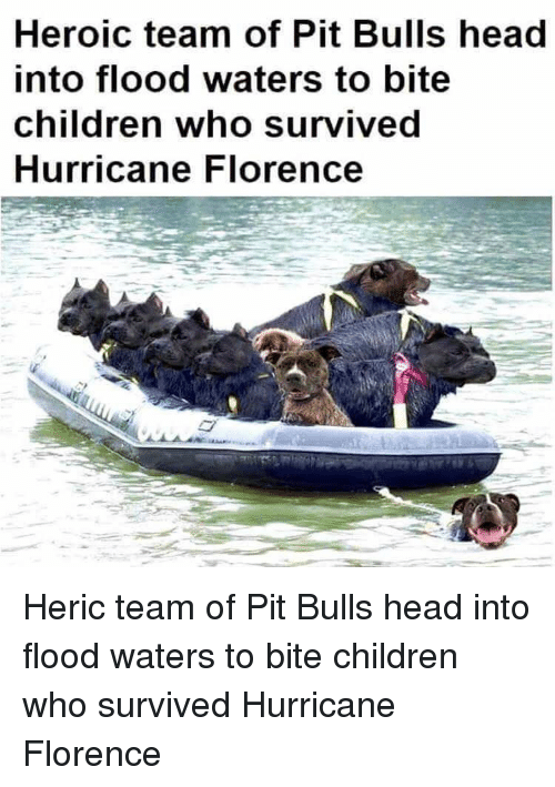 Children, Funny, and Head: Heroic team of Pit Bulls head  into flood waters to bite  children who survived  Hurricane Florence Heric team of Pit Bulls head into flood waters to bite children who survived Hurricane Florence