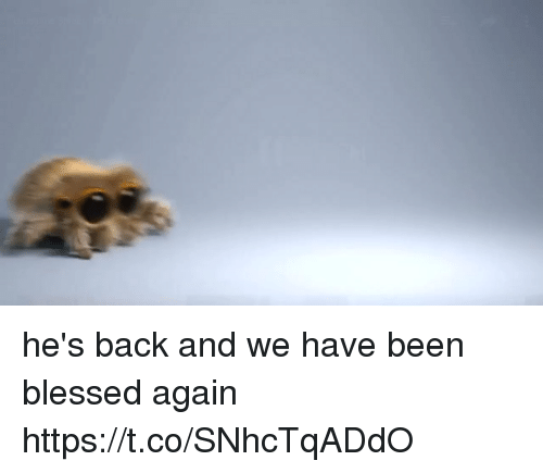 Blessed, Girl Memes, and Back: he's back and we have been blessed again https://t.co/SNhcTqADdO