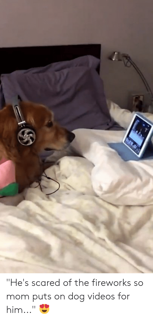 """Videos, Fireworks, and Mom: """"He's scared of the fireworks so mom puts on dog videos for him..."""" 😍"""