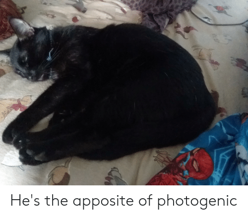 Hes, Photogenic, and The: He's the apposite of photogenic