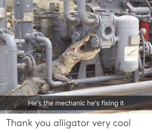 Thank You, Alligator, and Cool: He's the mechanic he's fixing it Thank you alligator very cool