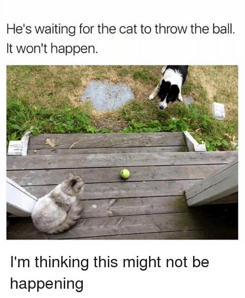 Dank Memes, Waiting..., and Cat: He's waiting for the cat to throw the ball  It won't happen. I'm thinking this might not be happening