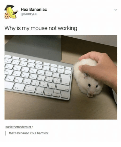 hex bananiac why is my mouse not working susiethemoderator that s