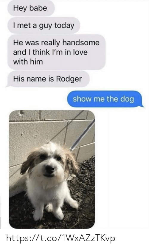 Love, Memes, and Today: Hey babe  I met a guy today  He was really handsome  and I think I'm in love  with him  His name is Rodger  show me the dog https://t.co/1WxAZzTKvp