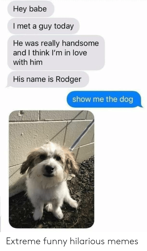Funny, Love, and Memes: Hey babe  I met a guy today  He was really handsome  and I think I'm in love  with him  His name is Rodger  show me the dog Extreme funny hilarious memes