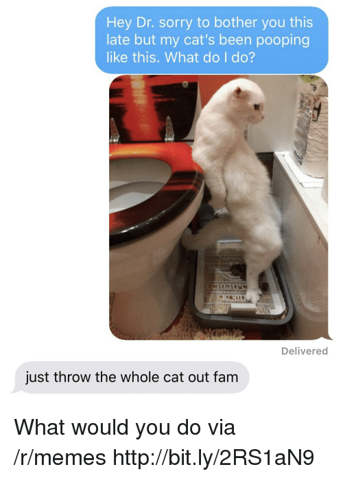 Cats, Fam, and Memes: Hey Dr. sorry to bother you this  late but my cat's been pooping  like this. What do I do?  Delivered  just throw the whole cat out fam What would you do via /r/memes http://bit.ly/2RS1aN9