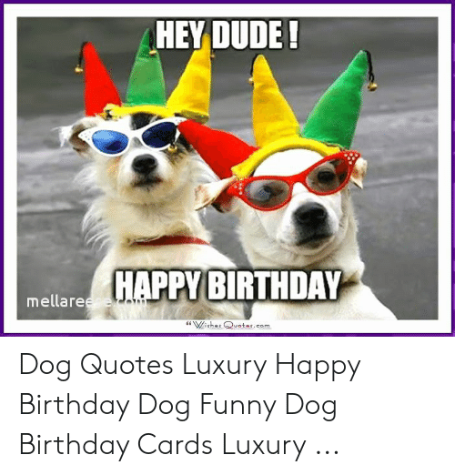 HEY DUDE! HAPPY BIRTHDAY Mellareese Wishes Quotescom Dog
