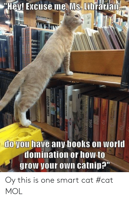 """Books, Memes, and Annie: Hey! Excuse me, Ms. Librarian  Parac  Outla  Remen  the Be  John Ty  Ph  PHIIP  WLSON  FE  do you have any books on world  domination or how to  grow your own catnip?""""  KURLANSKY19  KERIANSKY 9  1969  YOUBDIEVE ANNIE  INMAGIC ER  Keetrice  doing  HISTORIC DECCADE  BOOM  GOOD TIMES Oy this is one smart cat                   #cat        MOL"""