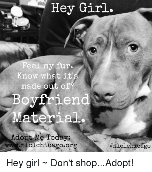 Chicago, Girl, and Boyfriend: Hey Girl.  Feel my fur.  Know what it  made out of?  Boyfriend  Material.  Adopt Me Todeya  wwwnlolchicago.org  Hey girl ~ Don't shop...Adopt!