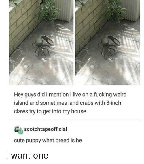 Cute, Fucking, and My House: Hey guys did I mention I live on a fucking weird  island and sometimes land crabs with 8-inch  claws try to get into my house  CAscotchtapeofficial  cute puppy what breed is he I want one