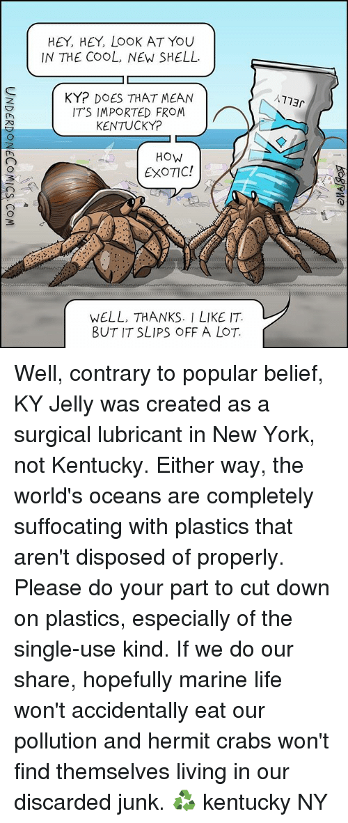 Life, Memes, and New York: HEY, HEY, LOOK AT YOU  IN THE COOL, NEW SHELL.  KYr DOES THAT MEAN  ITS IMPORTED FROM  KENTUCKY?  HOW  EXOTIC!  WELL, THANKS. I LIKE IT  BUT IT SLIPS OFF A LOT.  AT73r Well, contrary to popular belief, KY Jelly was created as a surgical lubricant in New York, not Kentucky. Either way, the world's oceans are completely suffocating with plastics that aren't disposed of properly. Please do your part to cut down on plastics, especially of the single-use kind. If we do our share, hopefully marine life won't accidentally eat our pollution and hermit crabs won't find themselves living in our discarded junk. ♻️ kentucky NY