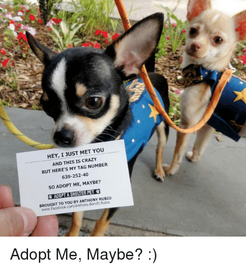 Crazy, Facebook, and Memes: HEY, I JUST MET YOU  AND THIS IS CRAZY  BUT HERE'S MY TAG NUMBER  639-252-40  so ADOPT ME, MAYBE?  R ADOPIASHELNER PET  ANTHONY RUBIO  BROUGHT Anthony  Facebook.com Adopt Me, Maybe? :)