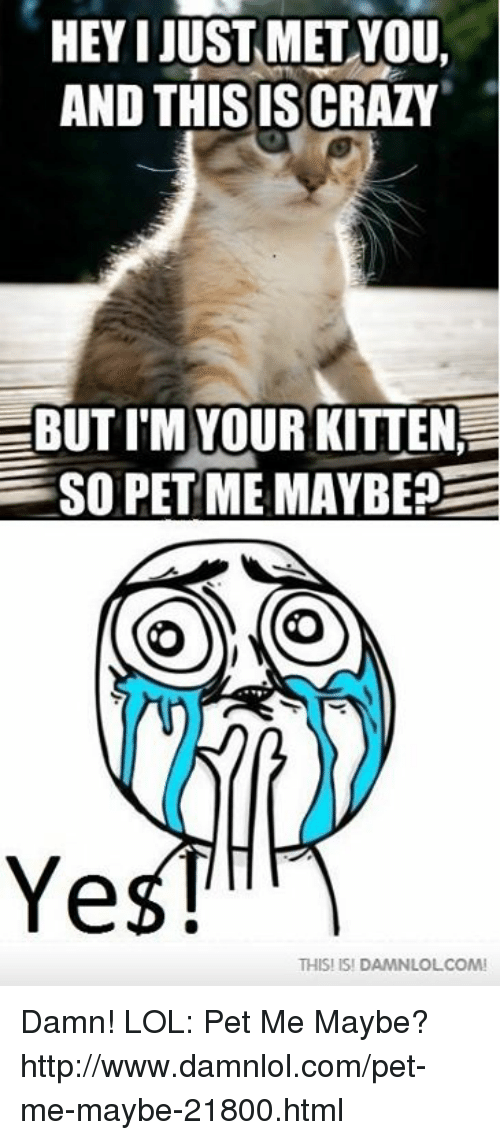 Memes, 🤖, and Damned: HEY I JUST MET YOU,  AND THISISSCRAZY  EBUTI M YOUR KITTEN  SO PET ME MAYBE?  E  O  Ye  THIS! ISI DAMNLOLCOMI Damn! LOL: Pet Me Maybe?