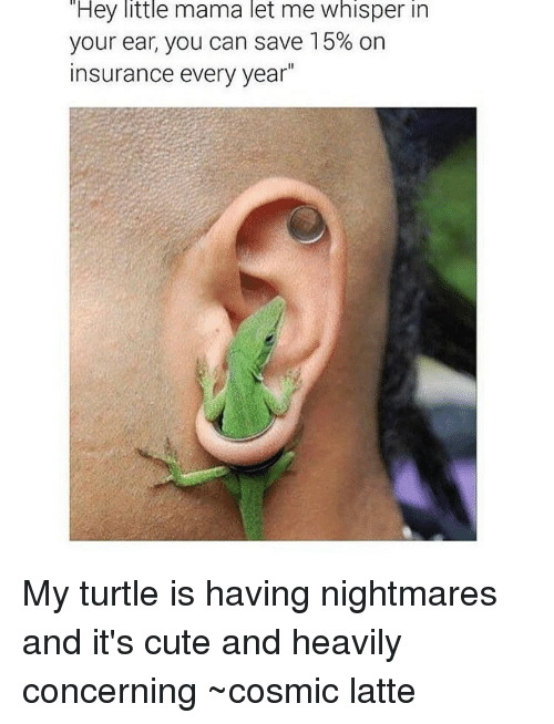 Memes, Turtle, and 🤖: Hey little mama let me whisper in  your ear, you can save 15% on  insurance every year My turtle is having nightmares and it's cute and heavily concerning ~cosmic latte