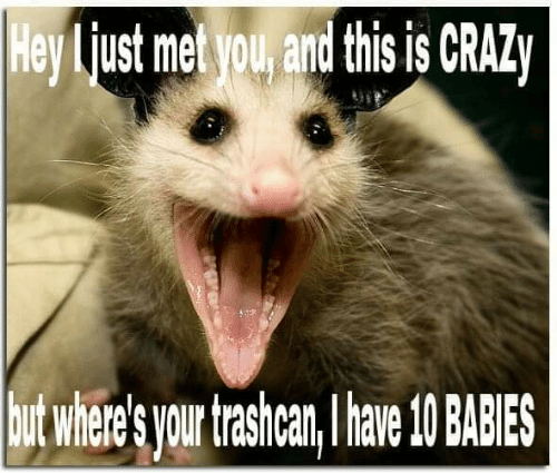 Crazy, You, and This: Hey liust met you, and this is CRAZy  utwhere' you trashcar,av 0BABIES