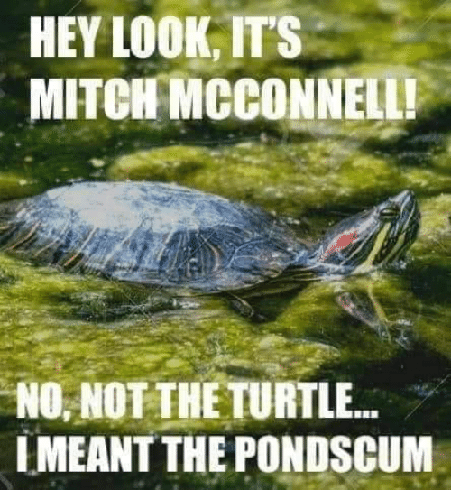 Memes, Turtle, and Mitch McConnell: HEY LOOK, IT'S  MITCH MCCONNELL!  NO, NOT THE TURTLE...  IMEANT THE PONDSCUM