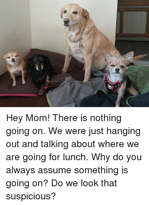 Memes, Moms, and Mom: Hey Mom!  There is nothing going on. We were just hanging out and talking about  where we are going for lunch. Why do you always assume something is going on? Do we look that suspicious?