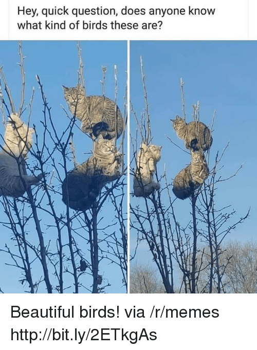Beautiful, Memes, and Birds: Hey, quick question, does anyone know  what kind of birds these are? Beautiful birds! via /r/memes http://bit.ly/2ETkgAs