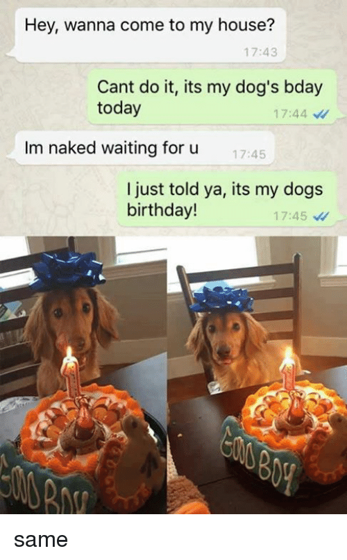 Birthday, Dogs, and Memes: Hey, wanna come to my house?  17:43  Cant do it, its my dog's bday  today  17:44  Im naked waiting for u  17:45  I just told ya, its my dogs  birthday!  17:45 same